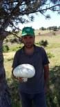 2 Kilo Ağırlığındaki Kültür Mantarı Görenleri Şaşırttı