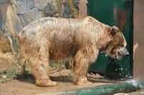 FARUK YALÇIN HAYVANAT BAHÇESİ - Sıcaktan Bunalan Hayvanlar Buzlu Meyve İle Serinliyor