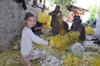 İPEKBÖCEĞİ - İpeğin Başkenti Bursa'da İpekböceği Hasadı Renkli Başladı