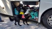 Milas'ta Yakalanan Esrar Tacirine Tutuklama