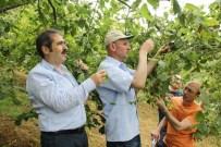 Trabzon'da Da Fındık Rekoltesi Belirleniyor