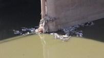Asi Nehri AB Gündemine Taşınıyor
