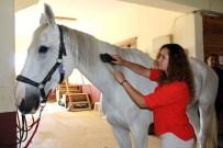 ATLI TERAPİ - Engelli Ve Yaşlılar, Atlarla Yapılan Terapi İle Şifa Bulacak