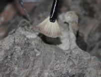 CORDOBA - Meksika'da 14 bin yıllık mamut fosili bulundu