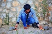 EZİLME TEHLİKESİ - Kaplumbağaları Eliyle Besliyor