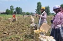 HÜSEYIN AVCı - Patates Üretimi Kavurucu Sıcak Altında Sancılı Başladı