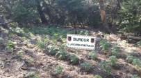 Burdur'da 19 Bin 975 Kök Kenevir Ele Geçirildi