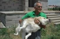 SOKAK KÖPEĞİ - Emekli Maaşıyla 65 Köpeğe Bakıyor