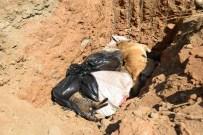HAYVAN BAKIM EVİ - Hayvanları Kim Gömdü ?