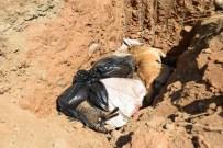 HAYVAN BAKIM EVİ - Seferihisar Belediyesi'nden Ölü Bulunan Hayvanlarla İlgili Açıklama