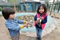 DEVE KUŞU - Büyükşehir Belediyesi Sincan Evcil Hayvanlar Parkı'nın Yeni Konukları