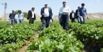 ALANYURT - Tarım İşçisi Olarak Geldiği Şehirde Bir İlki Gerçekleştirdi