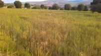 Afyonkarahisar'da Çiftçilerin Kullandığı Gübre Mahsullere Zarar Verdiği İddiası