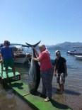 ORKİNOS - Kadın Muhtar Yakaladığı 80 Kiloluk Balığı Mahalleye Dağıttı