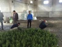 CAMİ BAHÇESİ - Patnos'ta 3 Bin Adet Çam Fidanı Dağıtıldı