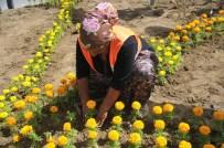 CAMİ BAHÇESİ - Bozüyük Çiçeklerle Taçlanıyor