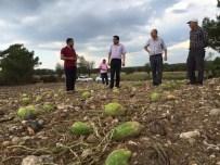 AFET BÖLGESİ - Milletvekili Öz, Dolu Yağışından Zarar Gören Tarım Arazilerini İnceledi