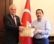 FINDIK TOPLAMA - İspanya Türk Sepetleri İle Fındık Toplayacak