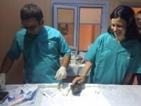 BAKI ERGÜL - Sinop'ta Hayvan Bakım Evine Fransız Stajyer