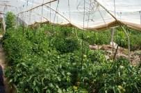 SEBZE ÜRETİMİ - Tokat'ta Hava Şartları Sebze Hasadını Geciktirdi