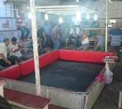 Horoz Dövüşüne Polis Baskını Açıklaması 28 Gözaltı