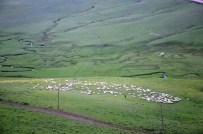 Yaylalar Koyun Sürüleriyle Şenlendi