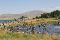 İNCİ KEFALİ - Van'da Kuş Ölümleri