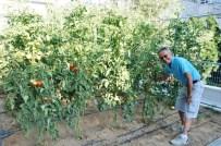 BARBUNYA - Apartmanın Bahçesini Sebze Tarlasına Dönüştürdü