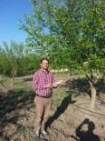 KİMYASAL GÜBRE - Çemişgezek'te Organik Dut Üretimi Yaygınlaşıyor