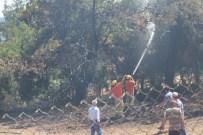 SİGARA İZMARİTİ - Orman Yangını Söndürüldü