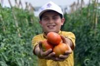 KISECIK - Çamlıyayla'da Çiftçilerin İlk Domates Hasadı Sevinci