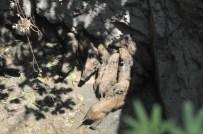 Milas'ta Su Kuyusuna Düşen Domuz Yavruları Kurtarıldı