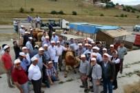 Samsun'da 42 Adet Boğa Dağıtıldı