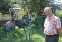 DEVE KUŞU - İtfaiye Bahçesinde Deve Kuşu Besliyor
