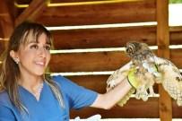 PELIKAN - Yaban Hayvanları Doğal Ortamında Tedavi Ediliyor