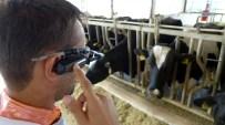 BİTKİSEL ÜRÜN - Hayvancılık Sektöründeki Zararlar Akılı Gözlüklerle Tespit Edilecek