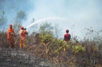 ORMAN ARAZİSİ - Kocaeli'de 20 Dönümlük Ormanlık Alan Kül Oldu