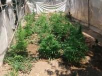 Milas'ta Seradan Uyuşturucu Çıktı