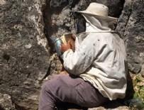 MEHMET KARA - 'Firari' arıların izini sürerek bal topluyor