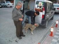 Emet'de Sokak Köpeklerine Aşı