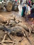ASLANCAMI - Fatsa'da Selden Bir Ahır Çöktü, 8 Büyükbaş Hayvan Telef Oldu