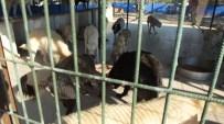 Kaçak Etler Köpeklere Yaradı