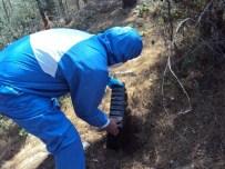 ÇAM KESE BÖCEĞİ - Antalya'da Çam Kese Böceğine Karşı Etkin Mücadele
