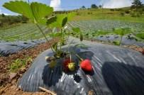 TEKKIRAZ - Büyükşehir'den Çiftçilere Ücretsiz Üretim Tesisi