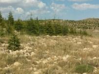 EROZYON - Mersin'de Ağaçlandırma Ve Erozyonla Mücadele Çalışmaları Sürüyor