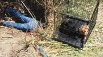 ESKIKÖY - Muğla'da Sulama Kanalına Sıkışan Köpekler Kurtarıldı
