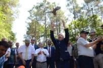 SINOP VALISI - Sinop'ta 200 Sülün Doğaya Salındı