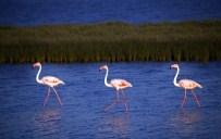 GÖZLEME - Dilek Yarımadası Büyük Menderes Deltası Milli Parkı Darphane Gibi