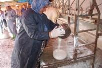 GIDA MÜHENDİSLİĞİ - 'Kaliteli Süt Çanakkale'den Geçer' Projesi Başladı