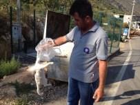 SOKAK KEDİSİ - Antalya'da Kedi Katliamı